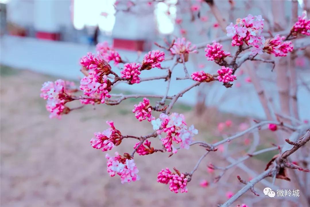 春日渐暖 漫步羚城